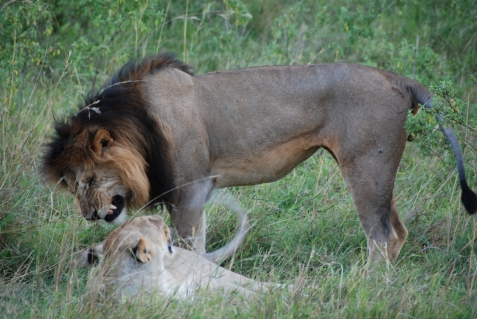 #masaimara, #safari, #kenya, #nairobi,